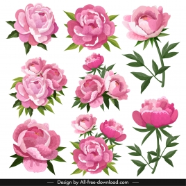 peonies petals icons pink blooming design