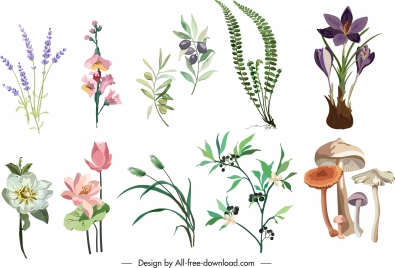 plants icons flowers mushroom colorful classical sketch