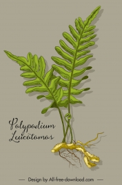 polypodium herb plant icon colored classic sketch