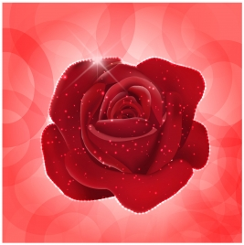 red rose realistic vector illustration