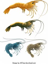 shrimp icons templates shiny colored sketch