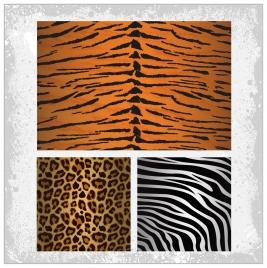 tiger zebra leopards skin pattern