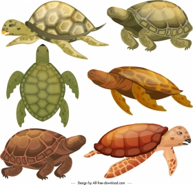 turtle species icons colored modern sketch