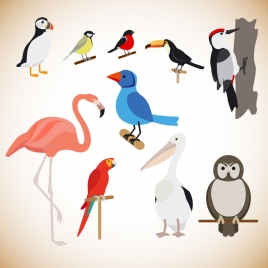 various birds vector illustration with color style