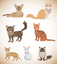 various cats vector illustration with innocent eyes