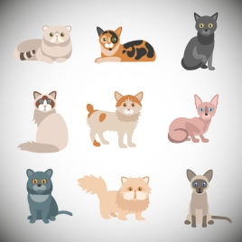 various cats vector illustrations with color style
