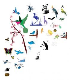 Vector Birds pack