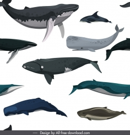 whales pattern template colored swimming species icons sketch