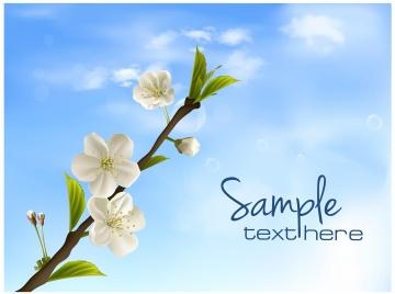 white branch sakura flower in the sky