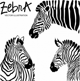 zebra icons black white stripes decoration